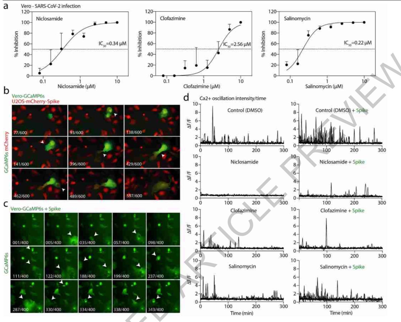 药物对SARS-CoV-2复制和细胞内钙振荡的影响。