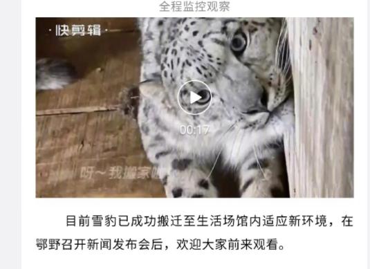 """网友发布截图显示,鄂尔多斯野生动物园曾发文称,被救助的雪豹""""将和大家见面""""。来源:网络。"""