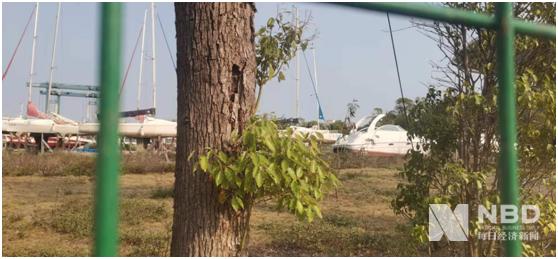 香山游艇项目内,部分停在草地上的船只 图片来源:每经记者 赵李南 摄