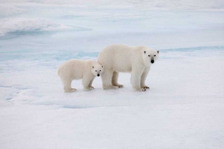 人工智能帮助预测南北极海冰流失