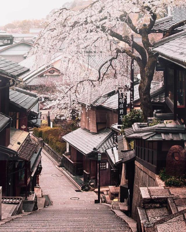 樱花季节的京都。IG: tabokin