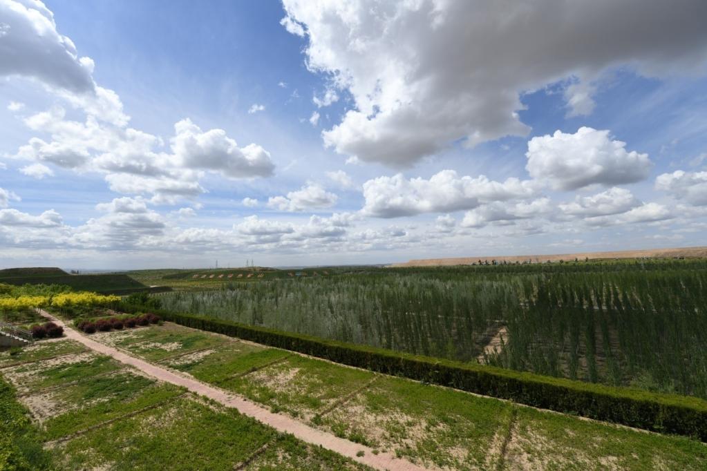 这是内蒙古鄂尔多斯市准格尔旗黑岱沟露天煤矿植被恢复区(5月26日摄)。新华社记者贝赫 摄