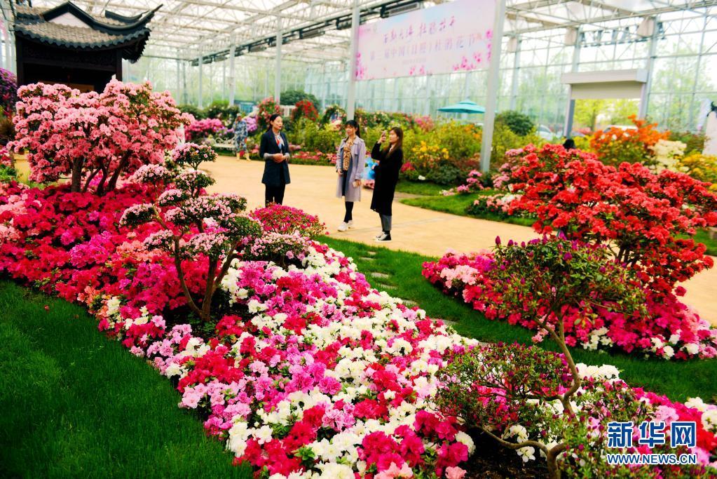 4月24日,游客在日照杜鹃花节上观赏杜鹃花。