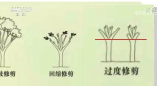 上海老人修剪自家树被罚  树危害大还是情僵硬执法危害大?(图4)