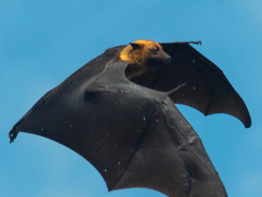 人工智能可以找到栖息于桥梁下的蝙蝠,准确率超过90%