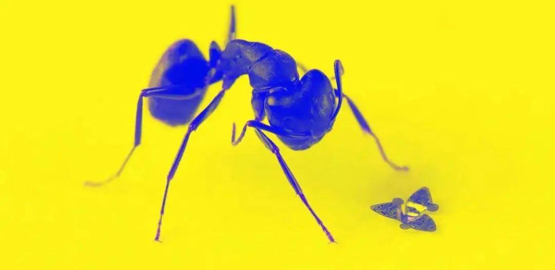 微型飞行器在普通蚂蚁旁. 图片来自:Northwestern University