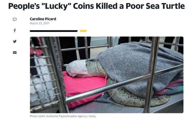 人们所谓的幸运硬币杀死了一只可怜的海龟/google新闻