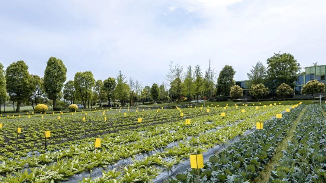 人工智能背景下的智慧农业发展