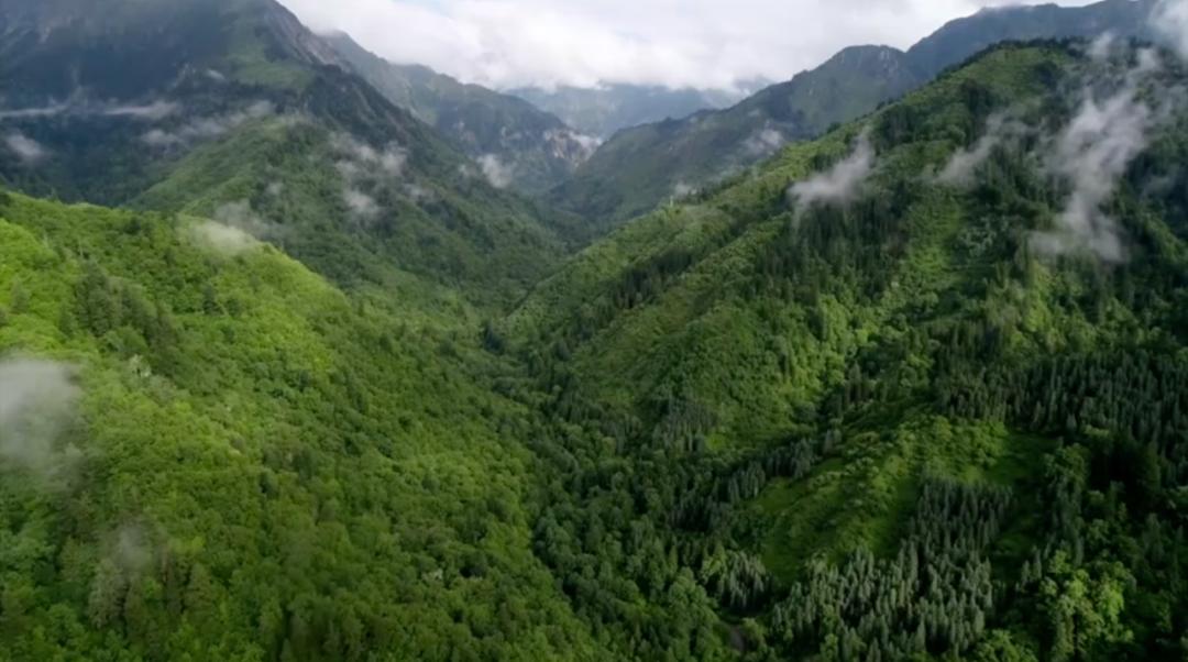 美国黄石的13倍!我国首批国家公园正式官宣,惊艳世界的风景真的来了