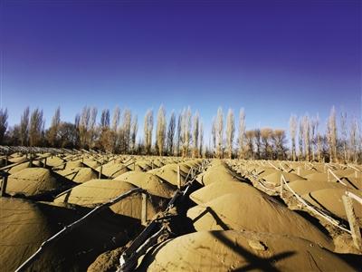 万亩沙漠防护林遭剃光头式砍伐,敦煌防沙最后屏障几近失守
