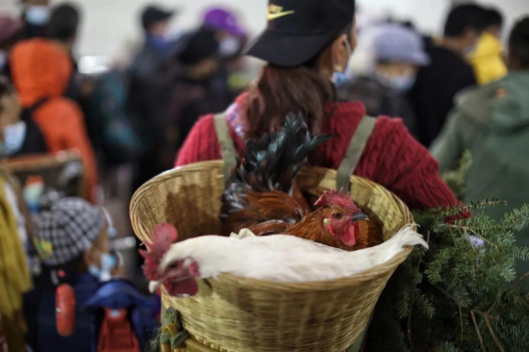 2月27日,普雄站,带着家禽乘车的人。新京报记者 王嘉宁 摄
