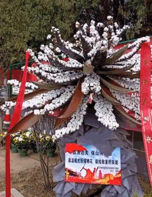 兰州烈士陵园里有个特殊花圈 是用新疆棉花做的