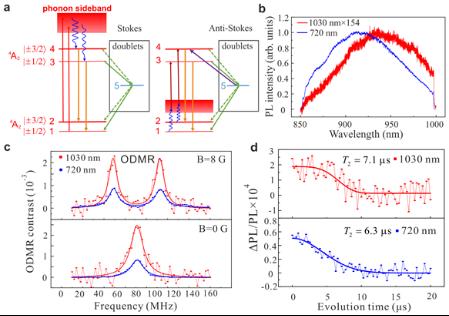 ▲实验结果图。图 a-d 分别比较了反斯托克斯 (1030 nm 激发) 和斯托克斯(720 nm 激发)的激发过程、光谱、ODMR 谱和自旋回波探测 | 图源:中国科大