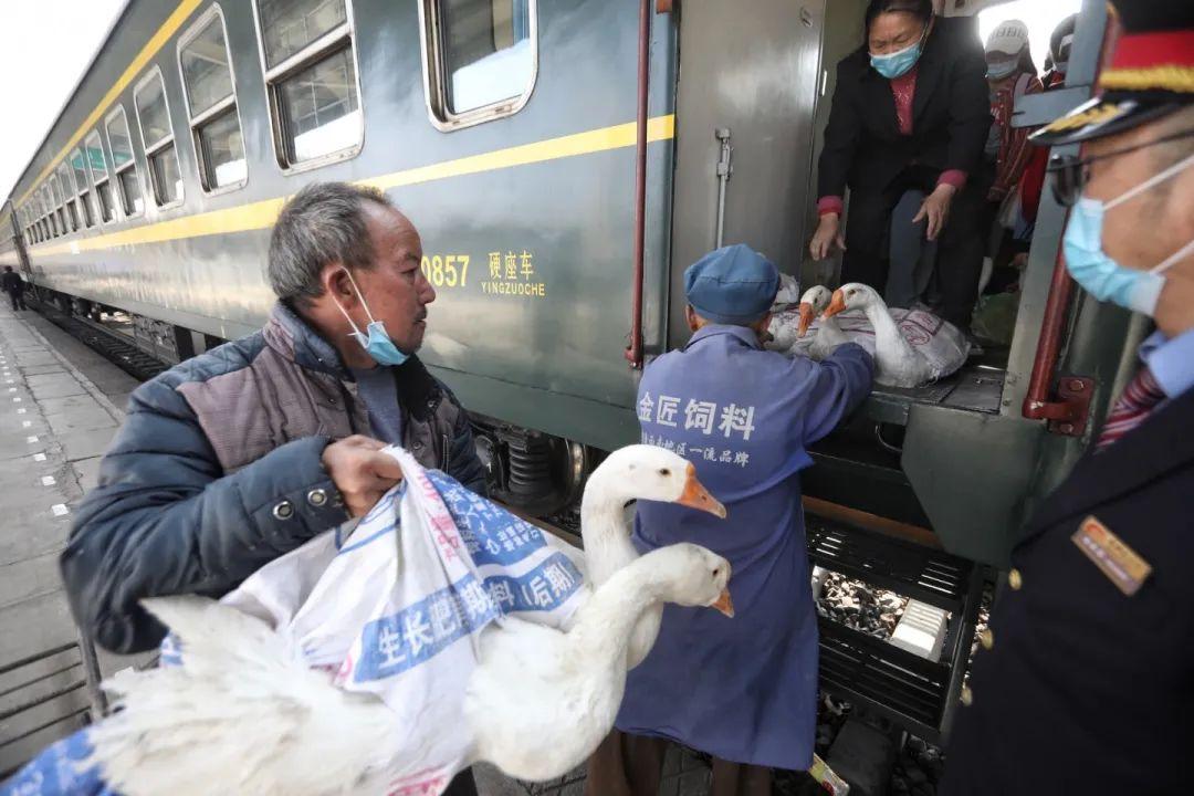 2月27日,冕宁站,家禽被运上5633次列车。新京报记者 王嘉宁 摄