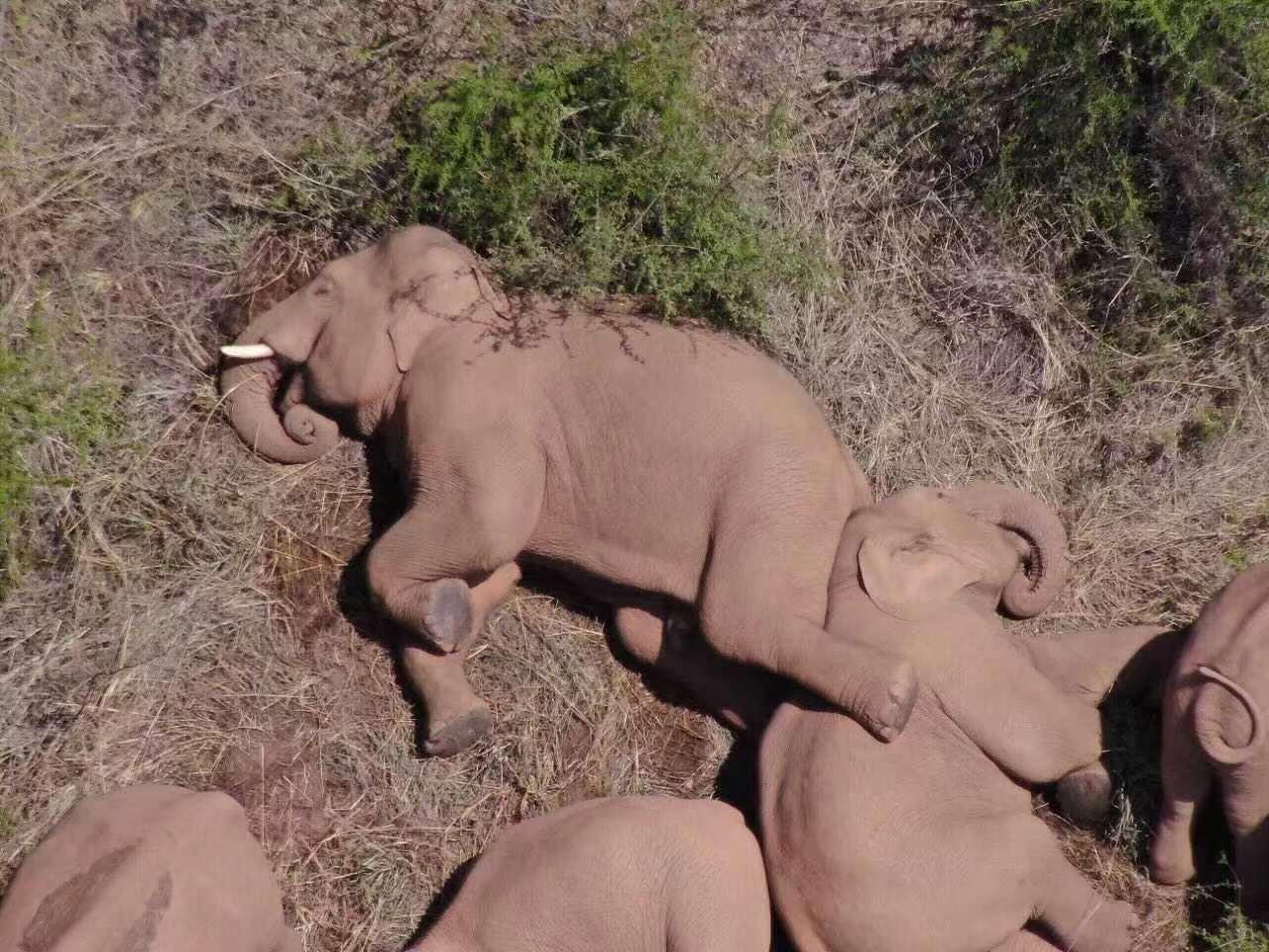 """6月9日,正在休息的象群。图源:""""云南发布"""""""