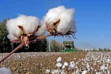 佟丽娅、蒋欣等多位新疆艺人发声:支持新疆棉花