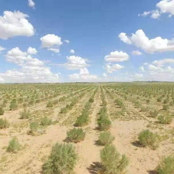 """""""一亿棵梭梭""""梭住风沙和村民 公益力量助力可持续防治荒漠化"""