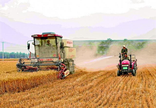 一边是小麦联合收割机割麦子,一边是农民开着拖拉机,拉着自制的喷淋设备洒水。新华社供图