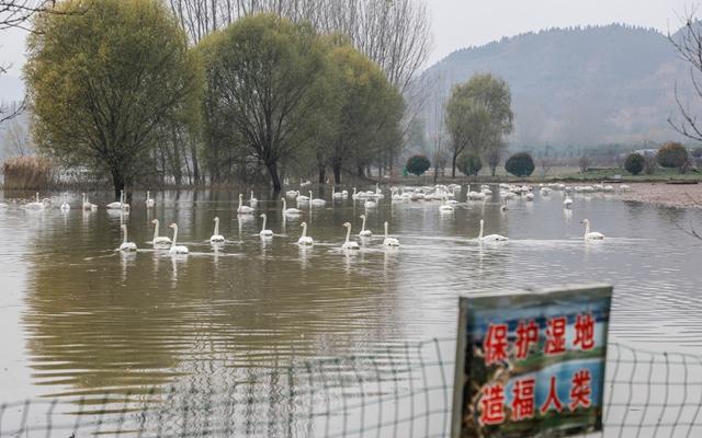 严重禽流感袭击亚洲,日韩公家叹气:吃不起鸡