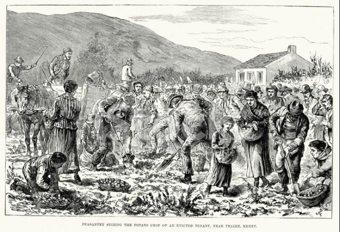 爱尔兰饥荒