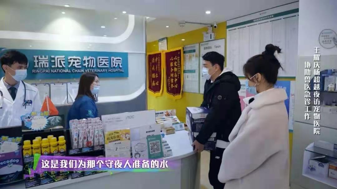 致敬都市守夜人,王耀庆、杨超越惊现瑞派宠物医院!