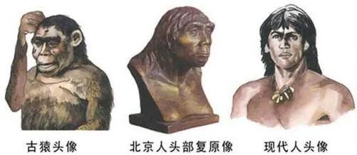 上图_ 古猿人、北京人、现代人 头像
