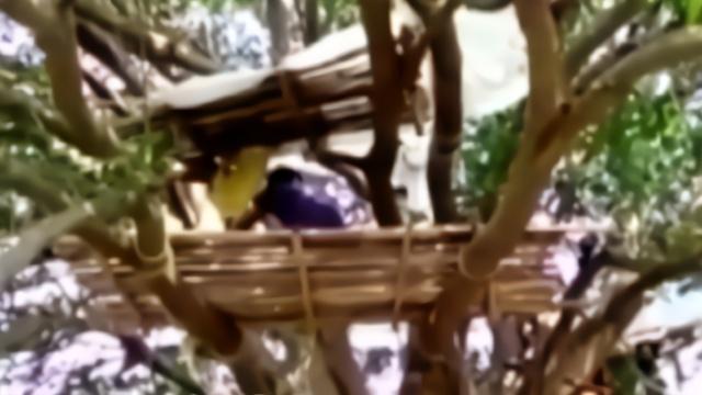 """家中无法隔离 印度有村民""""搭房子""""住到了树上"""