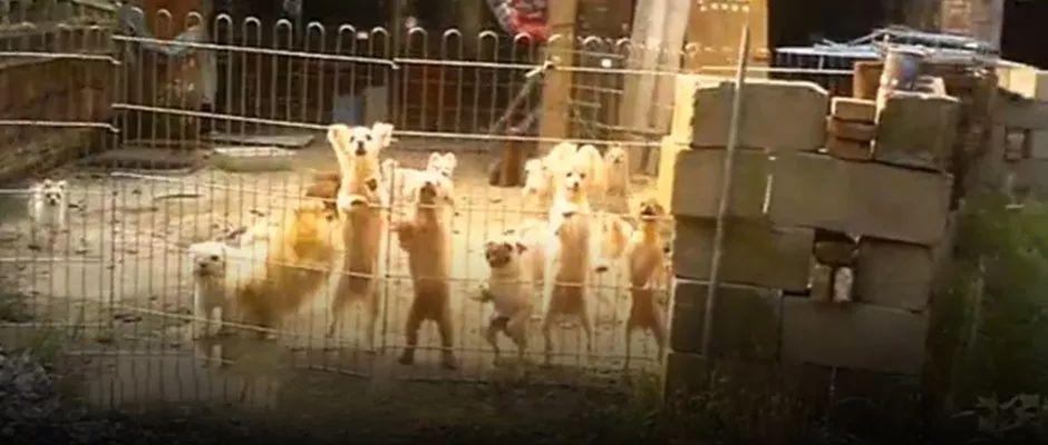 宠物经济的黑市:不打疫苗 病猫病犬摇身一变赚几千元