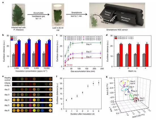 智能手机VOC传感器检测致病疫霉感染番茄叶的实战结果。(图片来源:Nature Plants)