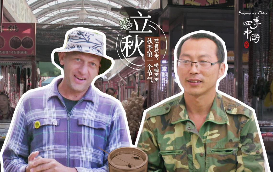 视见 | 这种昆虫为什么能在立秋影响中国人上千年的喜怒哀乐?