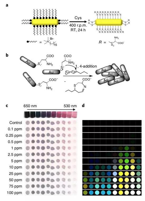VOC金纳米传感器的工作原理。最大吸收波长535nm的金纳米颗粒对(E)-2-乙烯醛最为敏感,0.25 ppm的气体便能产生光谱变化。(图片来源:Nature Plants)
