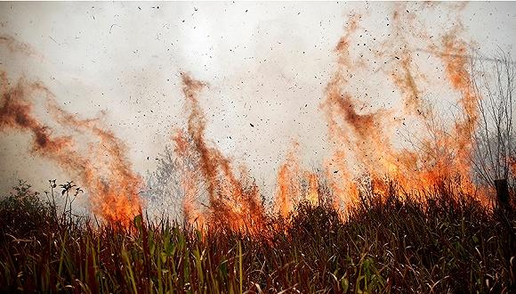 巴西数万军人奔赴前线灭火