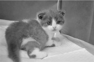 代怀孕 152次实验、4只代孕怀孕、身价25万 克隆猫背后的…