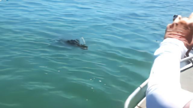 钓到鳄鱼! 澳大利亚一渔夫海钓 提起鱼竿时瞬间惊呆