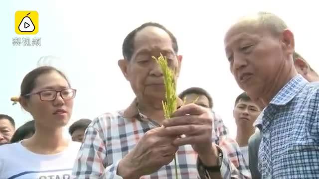 致敬!获授国家勋章当天,90岁的袁隆平还在田间