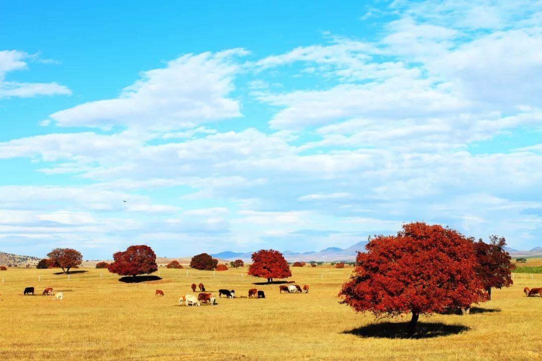 专属于十月的旅行目的地_你知道几个?