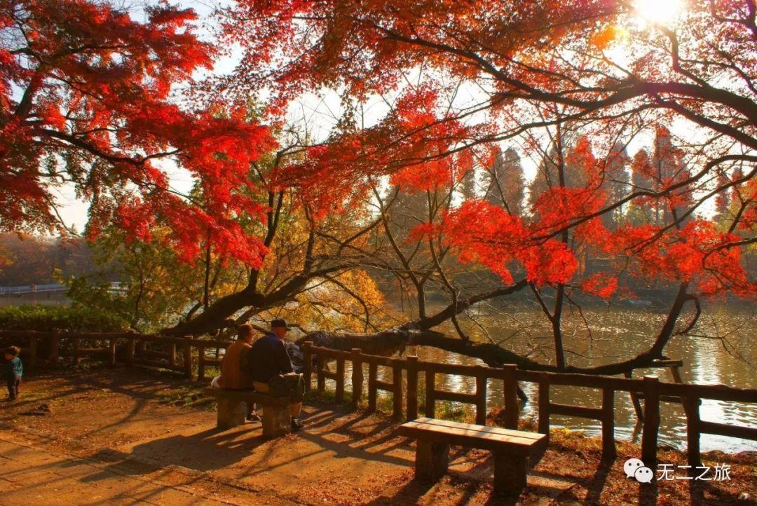 去秋天的京都走一走_才知道什么是诗意的温柔!