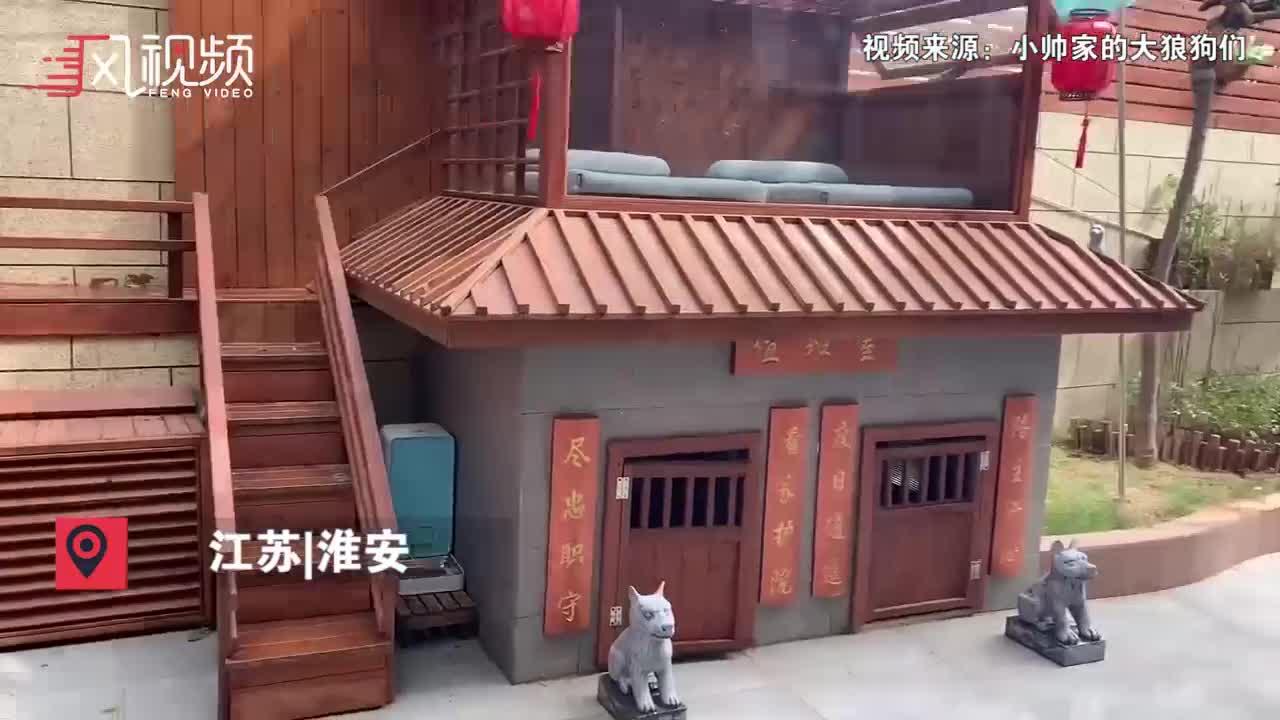 网友花35000元给狗狗建别墅:有游泳池,烘干房还有阳光房...