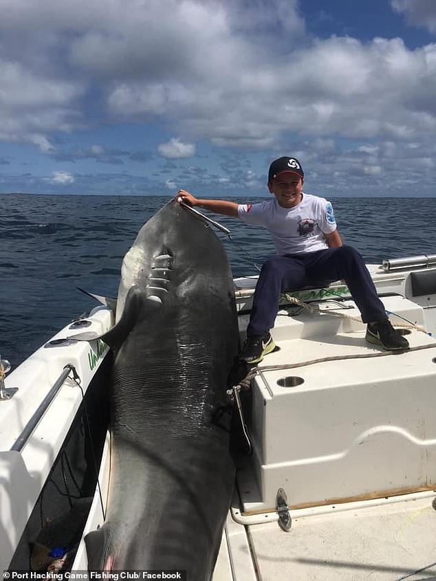 澳洲8岁男童捕获628斤巨鲨 或破世界纪录