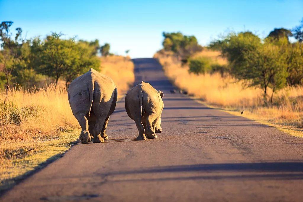 去南非看犀牛的小翘臀,跟企鹅学驴叫