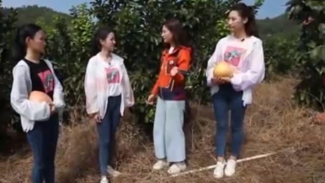 为了帮农户更好的卖柚子 3位中华小姐邀请往届冠军来帮忙