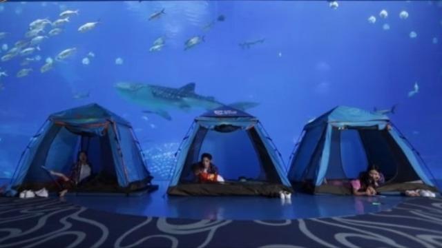3位华姐与3个小朋友夜宿鲸鲨馆?快来看看吧
