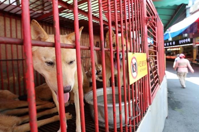 韩国首尔全面停止屠狗:市长一声令下 11家屠狗场全关门!