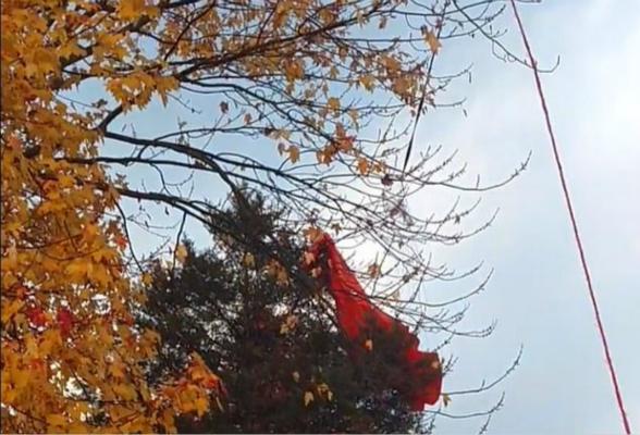 装置一部分卡在树上。