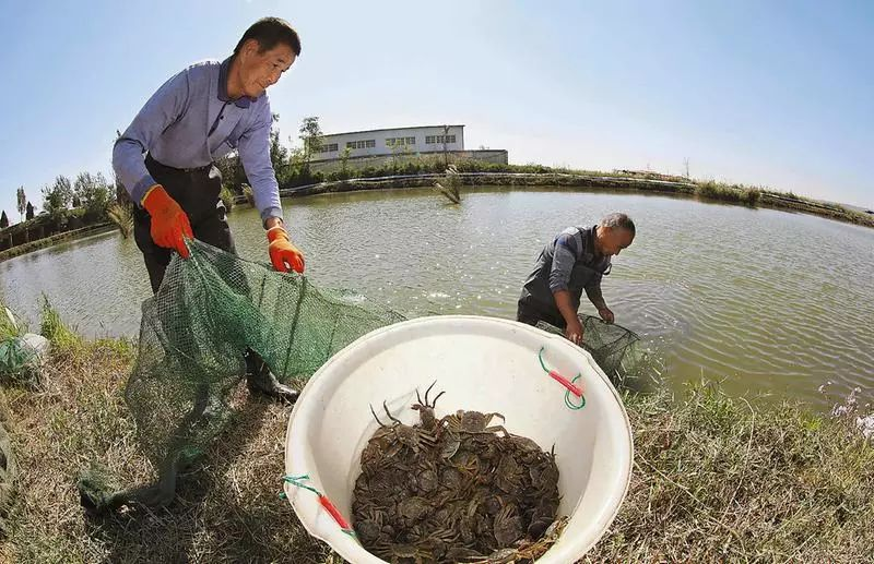"""大闸蟹 价格 大闸蟹乱象调查:价格跳水质量下滑 """"纸螃蟹""""横行"""