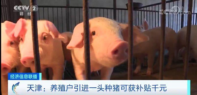 """猪肉价格啥时候""""稳住""""?时间点来了"""