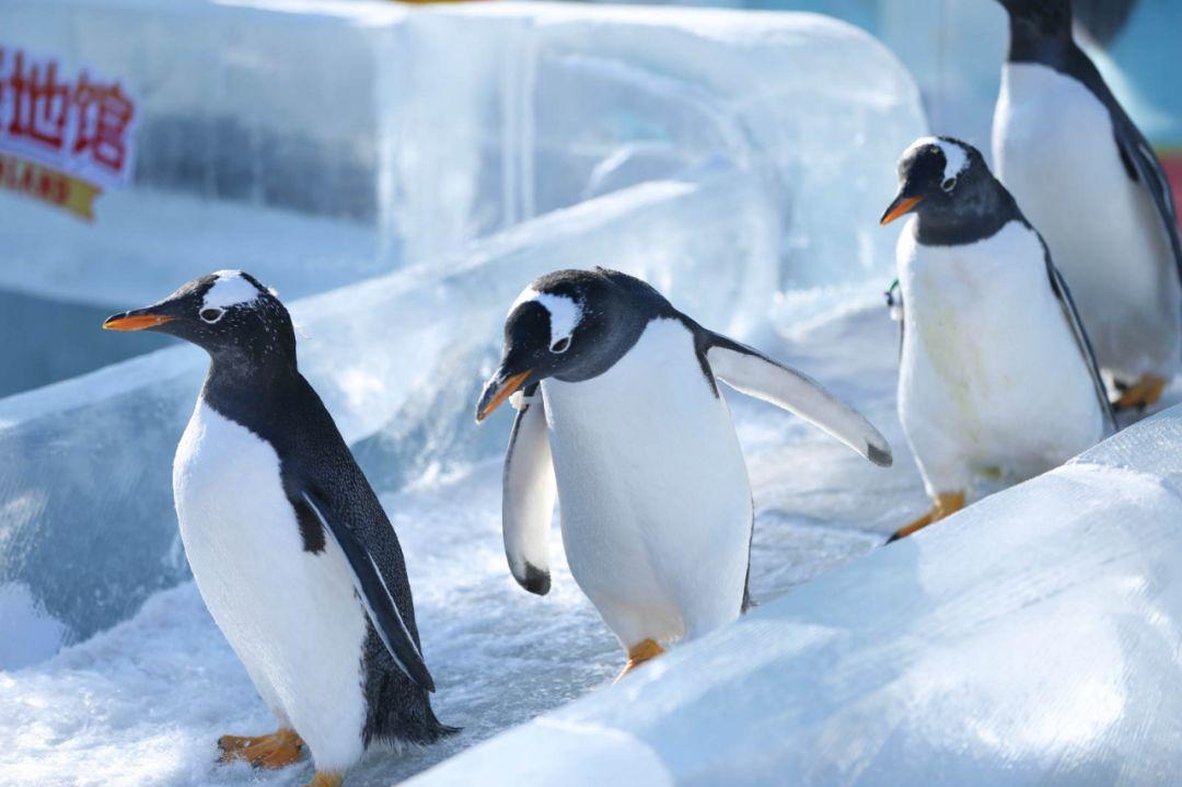 是时候往北走,去冰雪王国哈尔滨!感受俄式风情啦