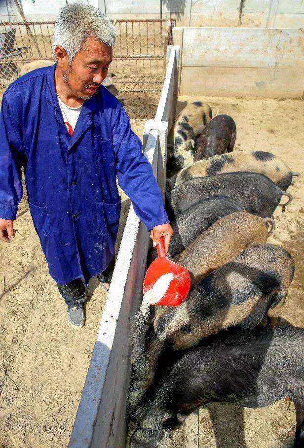 啥时候能再吃上便宜猪肉?权威消息来了!