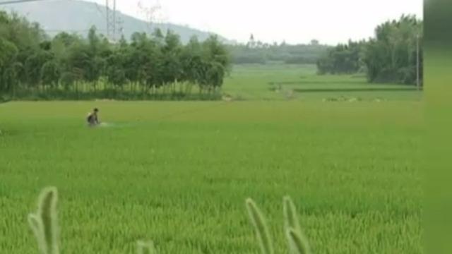 良渚文明为何被称作稻作文明?听听专家怎么说!