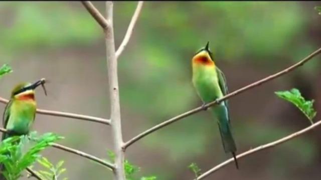 """五源河暗含许多匠心独具的设计 蜂虎鸟为其""""点赞"""""""